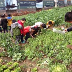 挖野菜成时尚 春天如何吃野菜呢